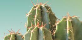 image cactus